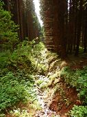 image of ravines  - small ravine with stream in the middle of forest - JPG
