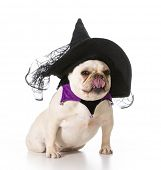 stock photo of sorcerer  - french bulldog wearing witch costume - JPG