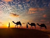 stock photo of camel  - Rajasthan travel background  - JPG