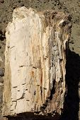 foto of petrified  - Petrified wood in the petrified forest of Sarmiento in Patagonia - JPG