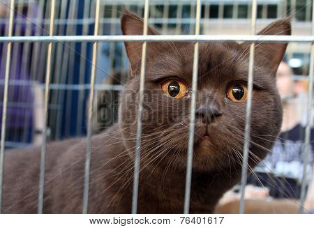 Brown Cat In A Cage