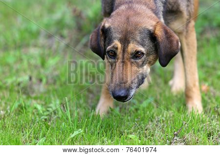 Homeless Dog On A Meadow