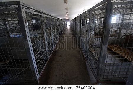 Cages Desiged For Ownerless Dogs.