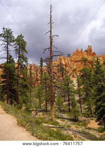 Trail At Bryce Canyon