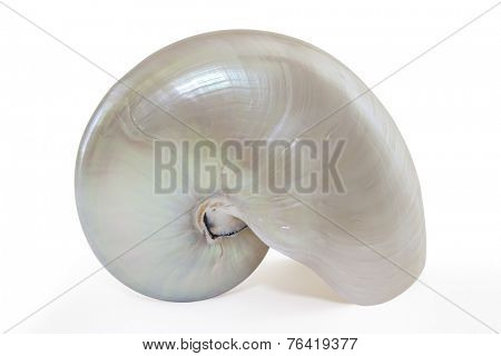 Nautilus seashell isolated on white.  Clipping path included.