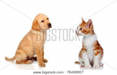 Nice puppy and kitten together isolated on white background