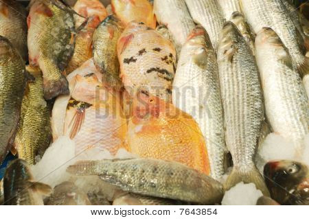 Fresh Fish For Sale