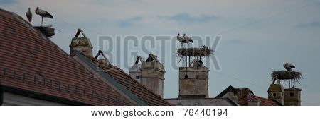 White Storks On The Roofs