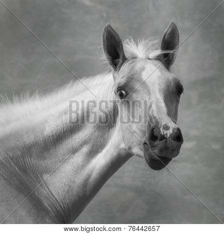 Portrait Of A Foal
