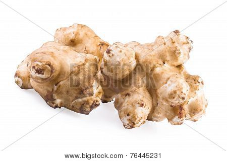 Jerusalem artichoke sunroot tuber