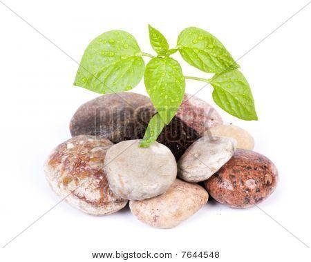 Pequeño brote verde entre piedras