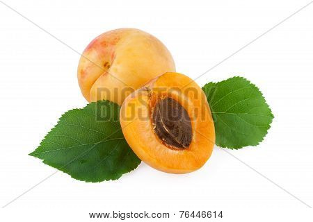 apricot fruit isolated on white