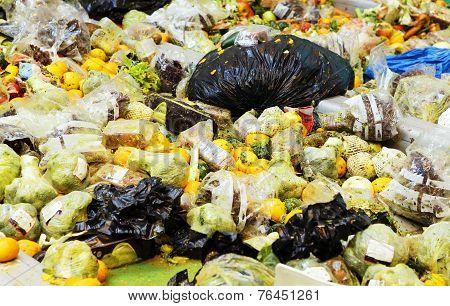 Organic Waste Plant