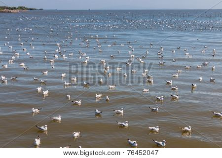 Crowd Of Seagull Floating In The Sea