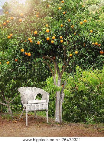 White Wicker Chair Under Orange Fruit Tree