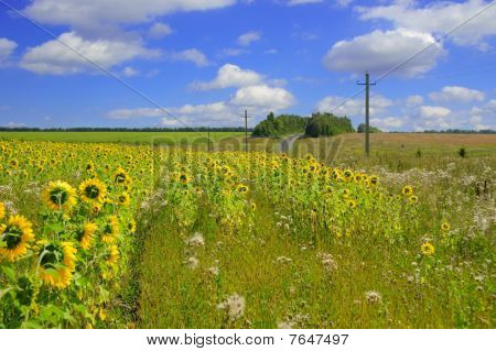 A Beautiful Field Of Flower