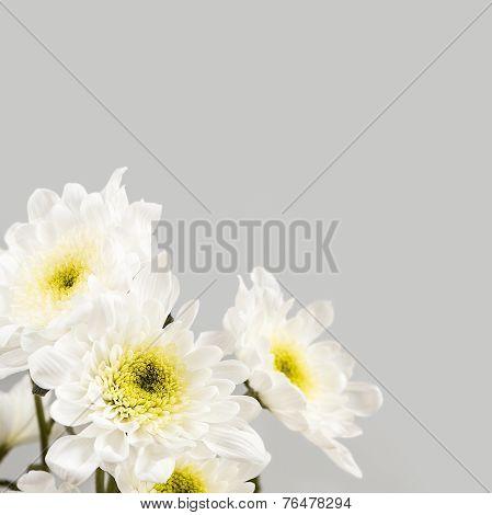 Spring Blossom. White Flowers.