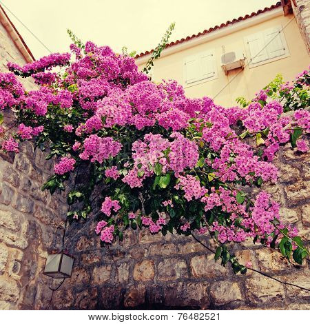 Bougainvillea And Mediterranean Stone Wall