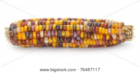 multicolored ear of Indian corn on white background