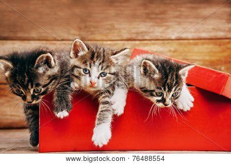 Little Cute Kittens In A Box