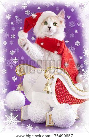 cat and british cat wearing a santa hat