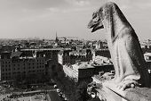 pic of gargoyles  - Gargoyle looking at Paris. Picture shot at the top of Notre dame cathedral.