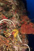 foto of seahorse  - Seahorse - JPG