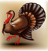 picture of turkey-cock  - Vector illustration of turkey cock. use for design - JPG