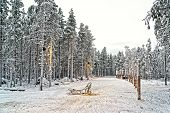 image of laplander  - Sledge at snow valley in finnish Lapland in winter - JPG