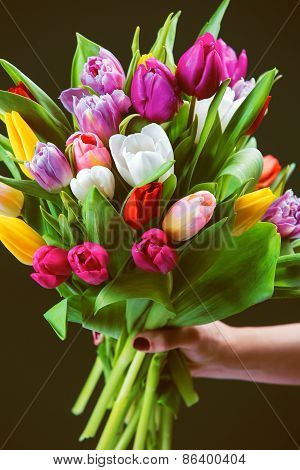 Bouquet Of Tulips In A Female Hand