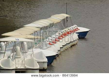 The Line of Duck Pedal Boat