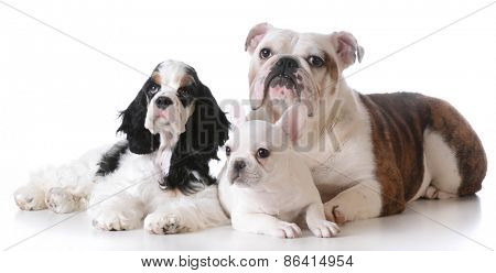 three purebred puppies laying down together on white background