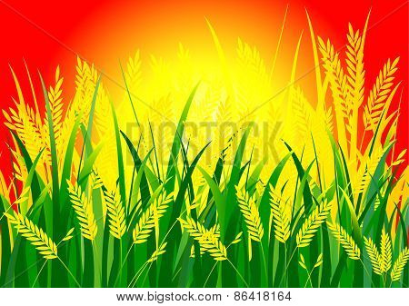 Rice and Sun