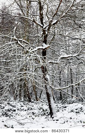 Snow on a forest tree