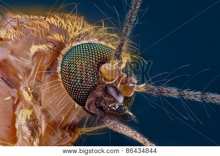 Very sharp detail of mosquito head