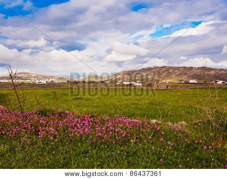 Meadows With Wild Flowers And Grass And Beautiful Sky With Clouds. Mykonos. Greece.
