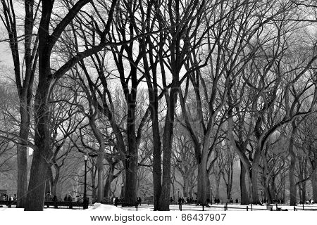 Leavless trees in Central Park