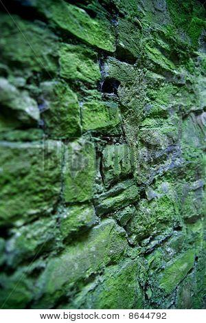 Moss wall closeup vertical