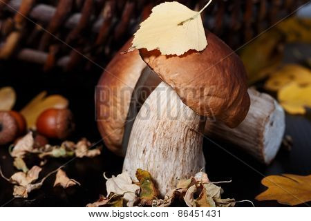 Ceps And Autumn Leaves