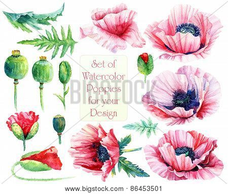 Set Of Different Pink, Red Poppies, Buds, Leaves For Design.