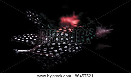 Collection Of Bird's Feathers On A Black Background