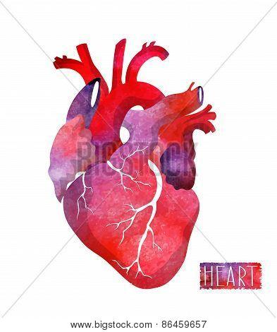 Realistic watercolor heart. Vector illustration.