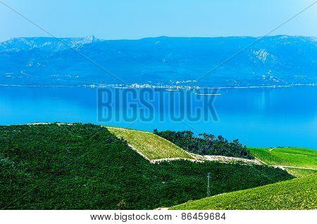 Croatian Coastline Along The Adriatic Sea With Olive Plantations