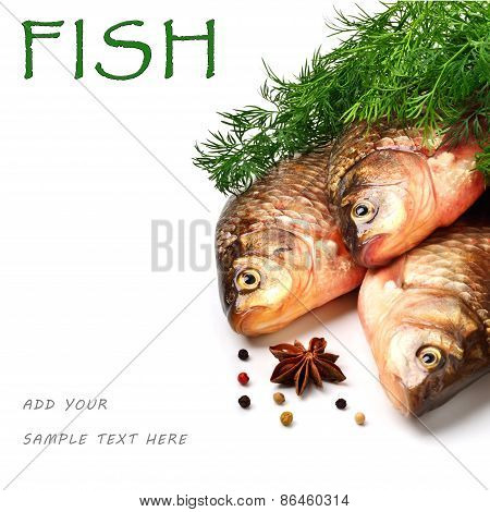 Crucian Carp Fishes With Green Dill
