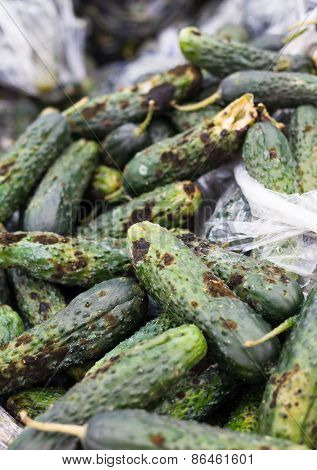Piles Of Rotten Cucumbers On The Landfill