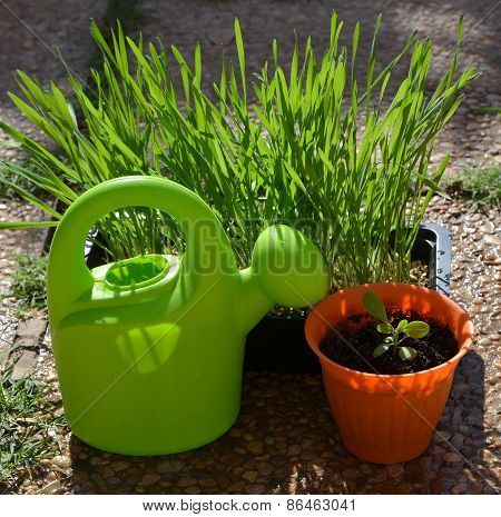 Green watering can and garden plants.
