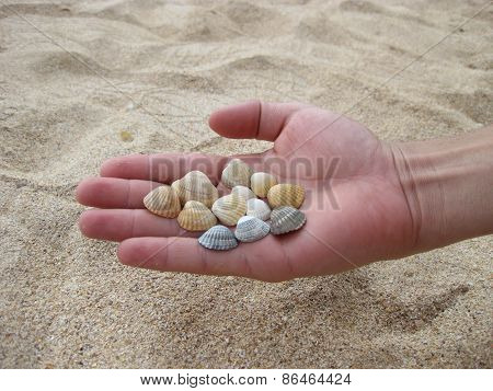 Cockleshells In A Hand.