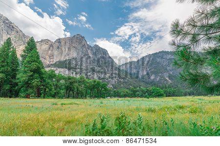 Valley Summer Grassy Field