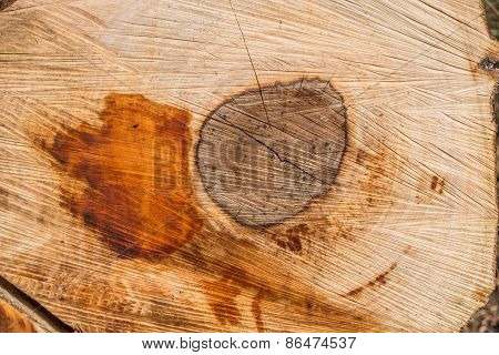 Crosscut Of A Log - Texture