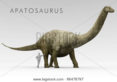 Dinosaur Apatosaurus And Human Size Comparison